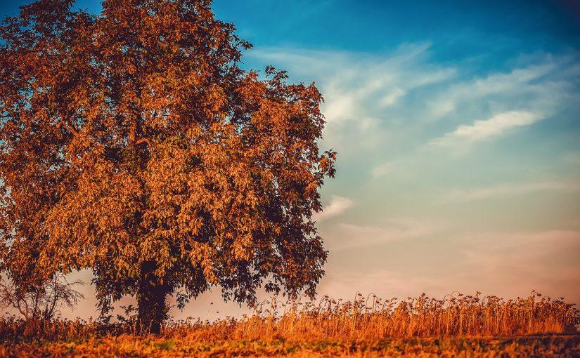 Ohlédnutí za podzimem