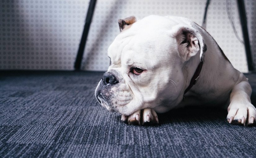 Proč pes slintá?