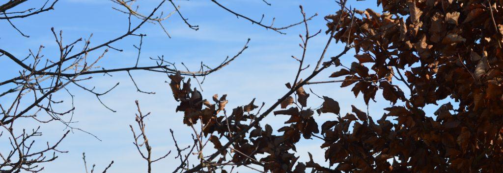 Strom s listy a strom bez listí