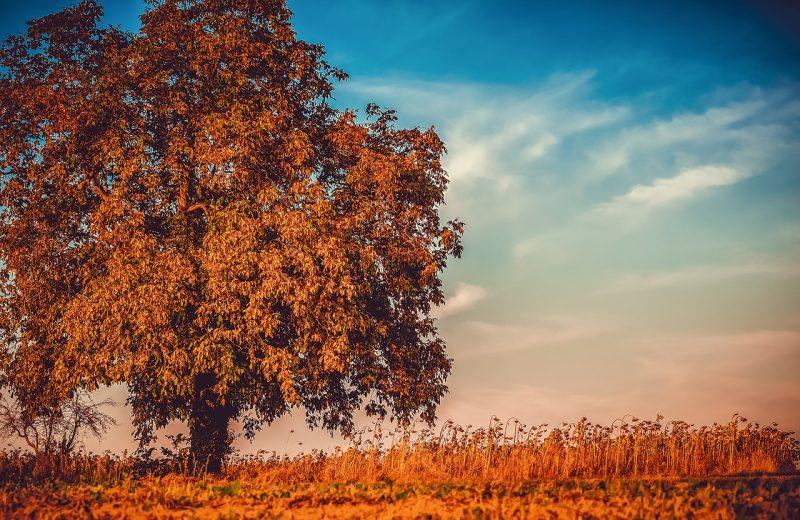 podzimní ořešák